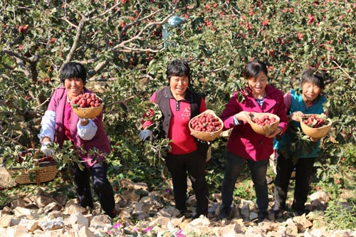 山楂树下的扶贫之路 临朐县寺头镇打造电商小镇
