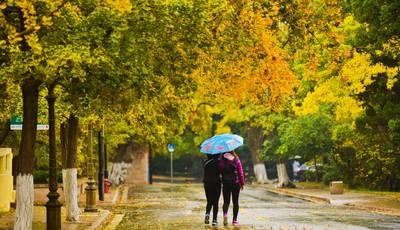 青岛八大关景区树叶色彩斑斓 不少游客冒雨漫步赏景