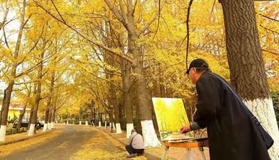 炫彩斑斓的树叶点缀着八大关的初冬