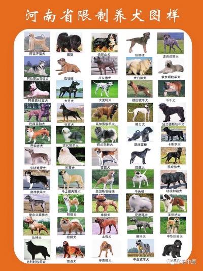河南拟禁养斑点,萨摩耶,秋田等50种犬只,违者可罚上万元