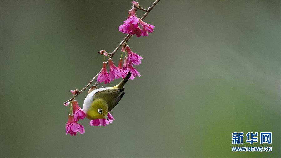 (新华网)(1)红花春鸟共新景