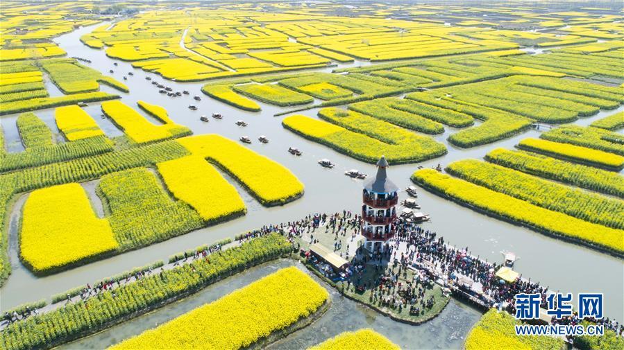 #(春季美丽生态)(1)江苏泰州:千垛菜花引客来
