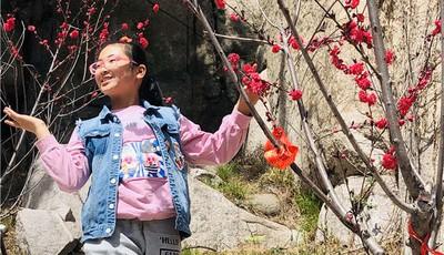 清明假期赏花游唱主角 青岛崂山风景区迎来客流小高峰