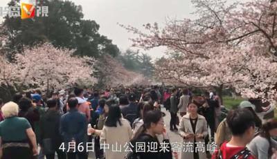 半岛V视 | 花海盛景万人赏!青岛中山公园人从众!