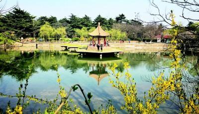 青岛中山公园小西湖很清新 不少游人休闲赏景