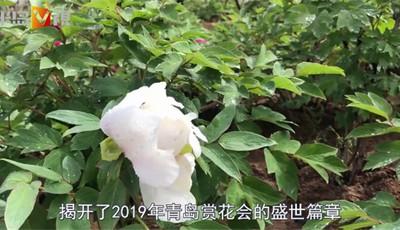 半岛V视 | 雨润牡丹园 青岛中山公园的花花世界不容错过