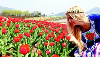百种欧洲名贵花卉惊艳亮相世博园