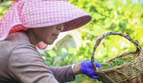 润春盛农家宴:品味正宗崂山绿茶,过一次属于自己的慢生活