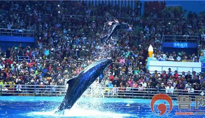 青岛又一海洋游乐新地标震撼面世!极地新地标·4.29鲸艳瞩目全新启航