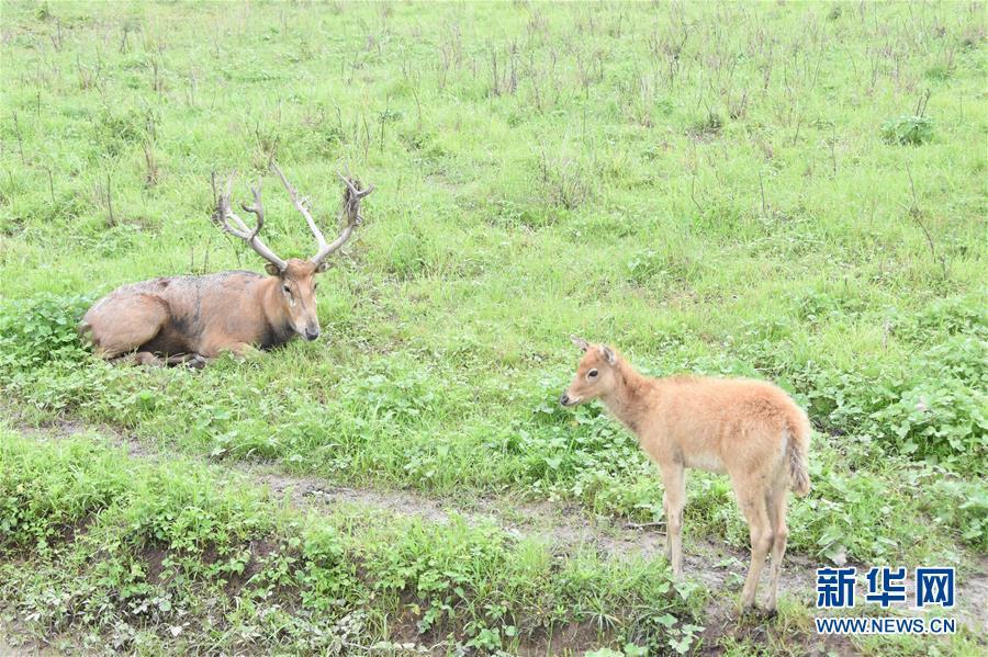 (图文互动)(1)鹿逐洞庭牵人心