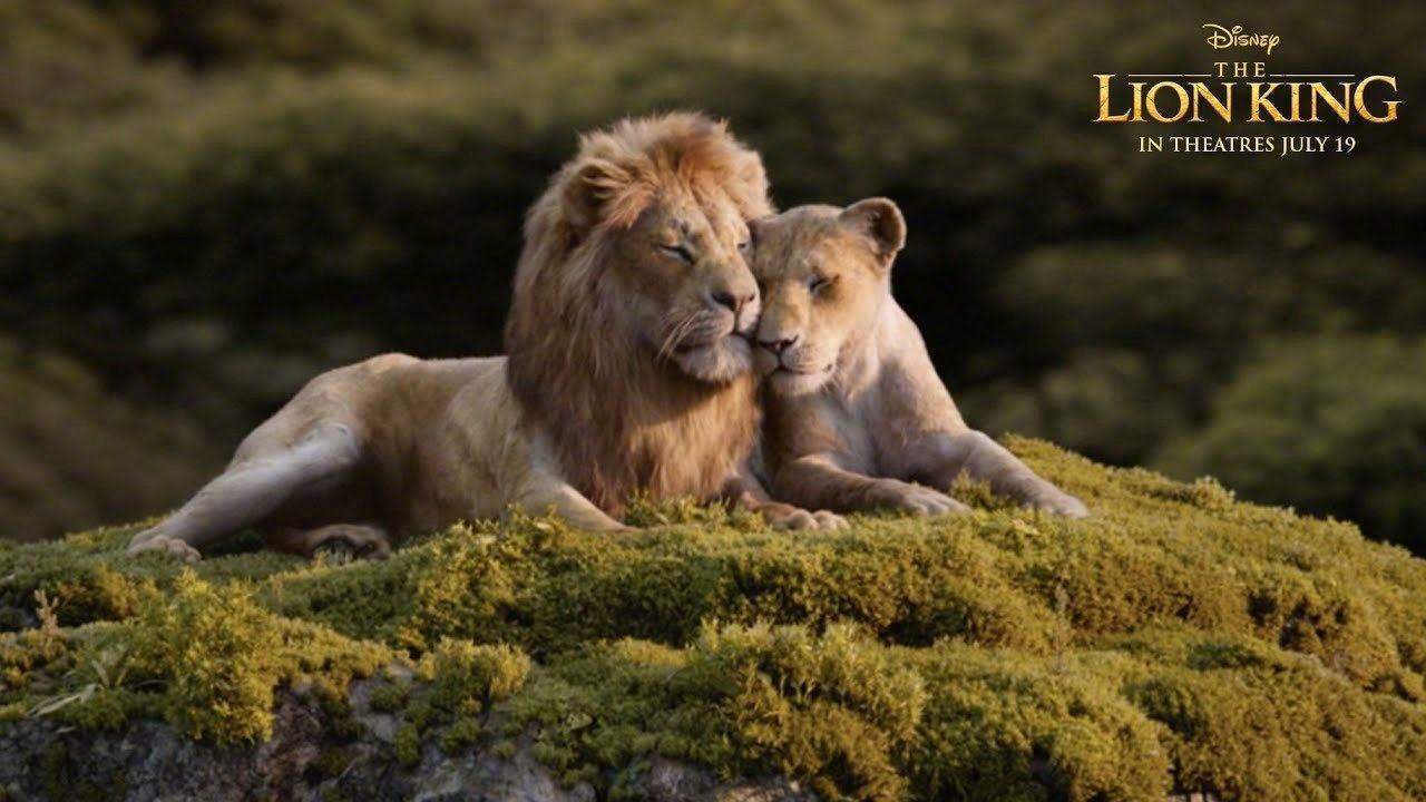 """真实得像看《动物世界》!""""真狮版""""《狮子王》效果逼真"""