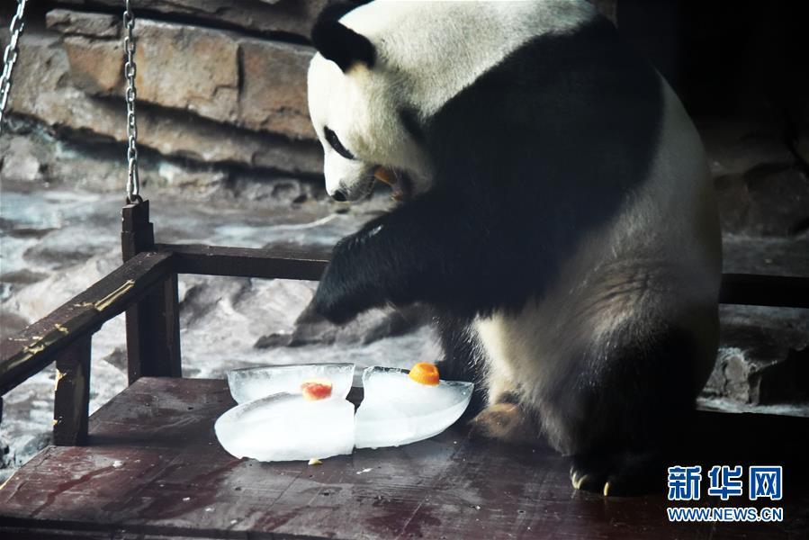 (社会)(5)大熊猫:空调房里乐享清凉一夏