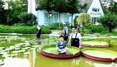 快去青岛中山公园小西湖欣赏大王莲 还能载人水上漂