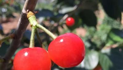 探青岛 |水果采摘、树林漫步、品茗谈笑......把日子过成诗的人气生态园√起来!还有门票免费送!