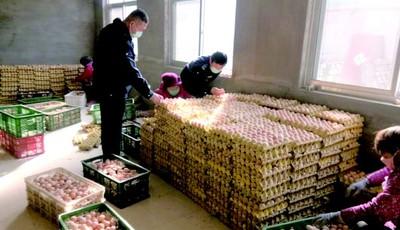 疫情阻路500吨鸡蛋卖不出 青岛市农业农村局牵线搭桥促内销