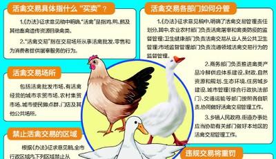 活禽交易青岛拟设禁区 鼓励实施活禽集中宰杀