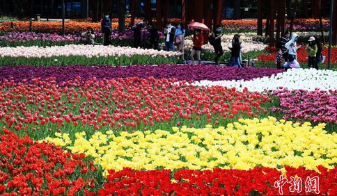 上海静安雕塑公园内百花迎春 许多游客前来赏花拍照