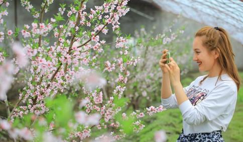 新疆博湖县博湖镇桃花盛开 吸引众多游客前来踏青赏花
