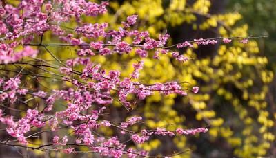 青岛市九水路一小口袋公园:各色鲜花开放 美不胜收