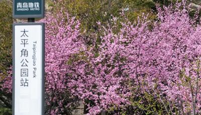 青岛太平角公园花红柳绿风景美 市民驻足赏春忙