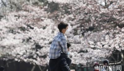 气温升樱花开 小长假去中山公园赏樱记得网上预约哦
