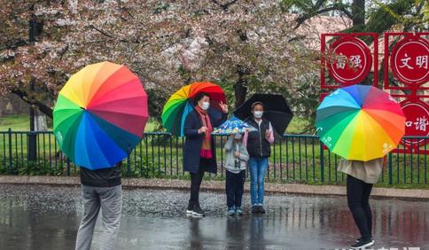 青岛中山公园:绿树红花生机勃勃 市民雨中赏园忙