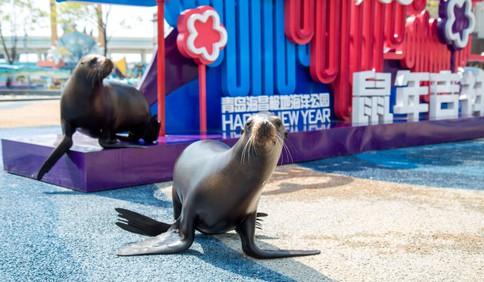 青岛海昌极地海洋公园的海狮明星CP化身游客 打卡青岛标志性风景建筑