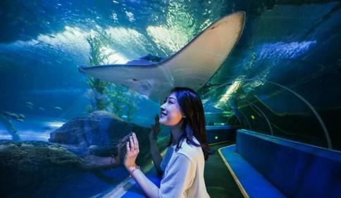 青岛海底世界将于5月11日重新开放 实行购票分时预约机制