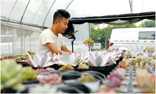 聚力打造农业3.0时代 淄博以数字经济赋能农业转型发展