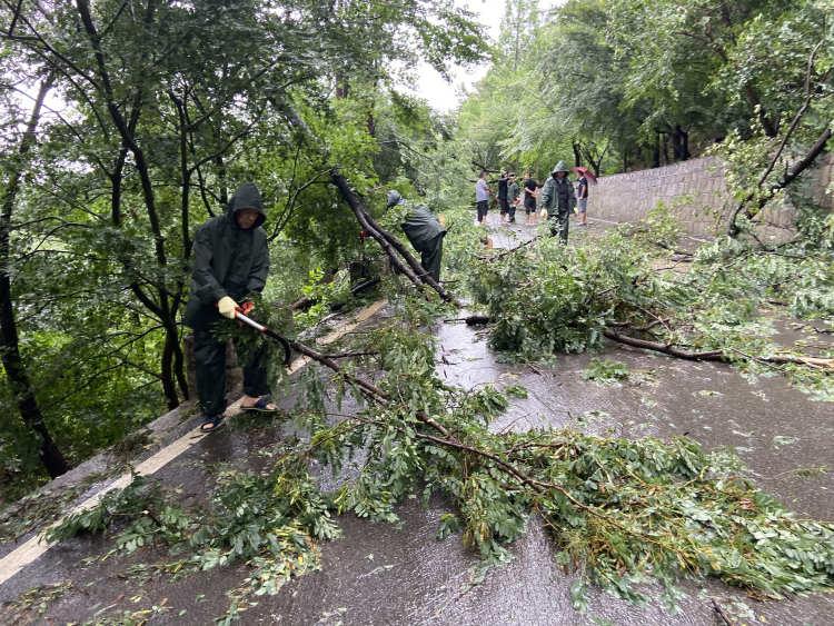 连夜暴雨后 青岛九水游览区工作人员清理倒塌树木