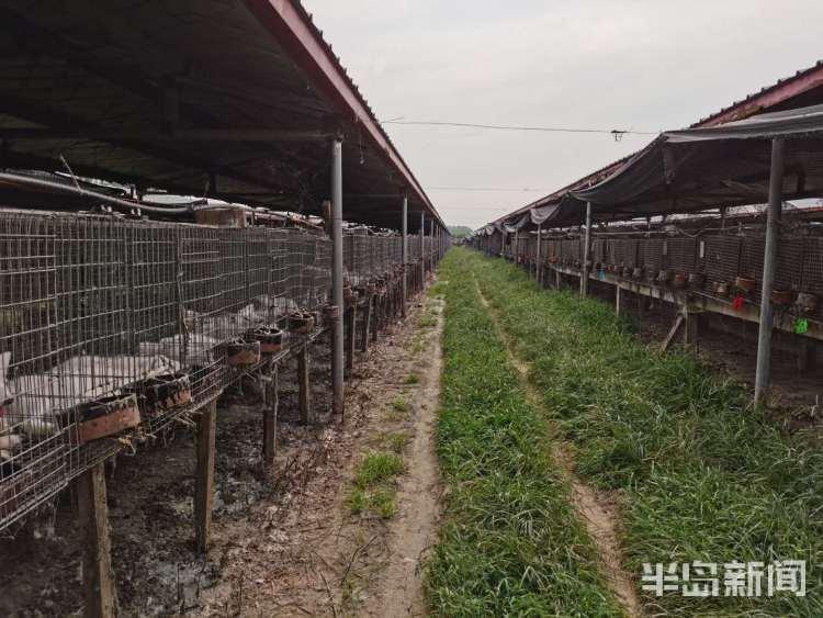 """在养禁食陆生野生动物处置""""窗口期"""" 青岛部分养殖户欲转型"""