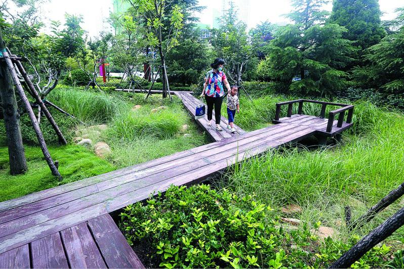 """青岛打造城市绿色""""网络""""今年已实施绿道建设62.4公里"""