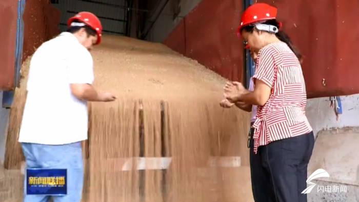 升级|科技做依托!山东小麦产业升级带动消费升级 百姓餐桌更丰富