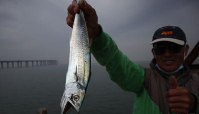 青岛胶州湾:钓鱼爱好者尽享假日渔趣