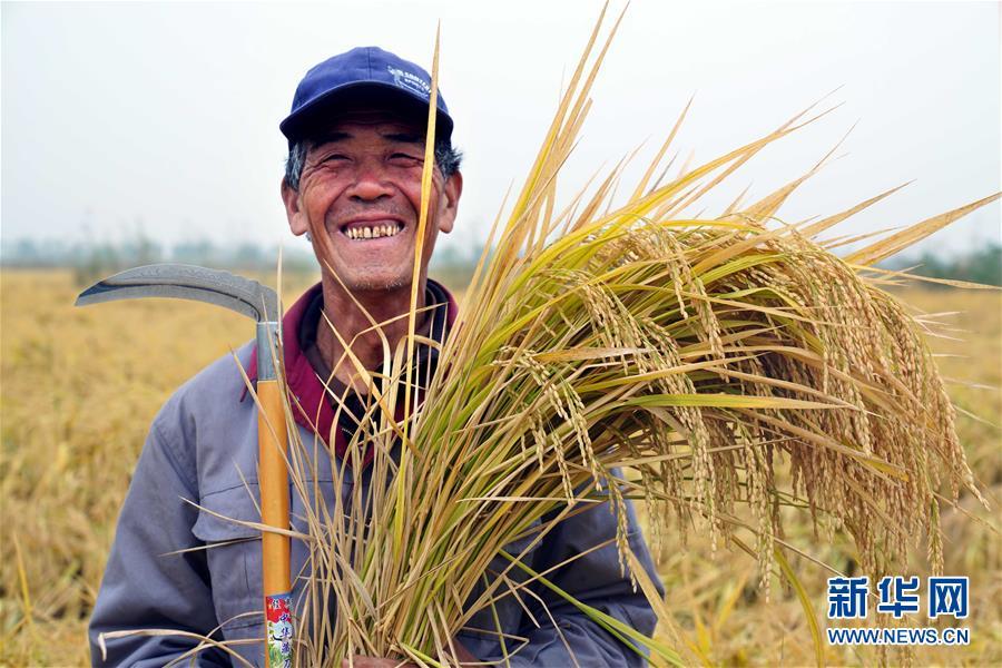(经济)(1)山东潍坊:5万亩海水稻测产平均亩产破千斤