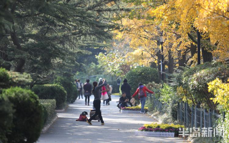 周日去赏菊 中山公园菊展本月15日将结束