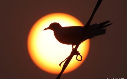 胶州湾:鸥歌渔港醉夕阳