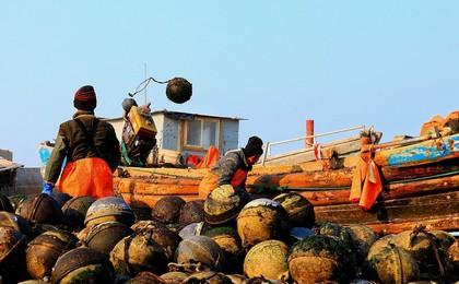 威海:扇貝收獲季節到 工人港口卸貨、分揀扇貝