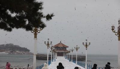白雪与回澜阁相映成趣 栈桥雪后风景美
