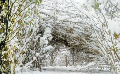 """开岁残冬 雪打""""牛头""""!25日上午 青岛仍有雨夹雪"""