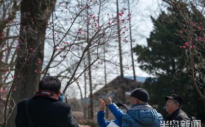青岛中山公园:梅花绽放 不负春光