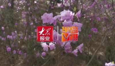 半岛V视|清明节去哪?山花烂漫正当时,灵珠山踏青祈福赏花节开幕了