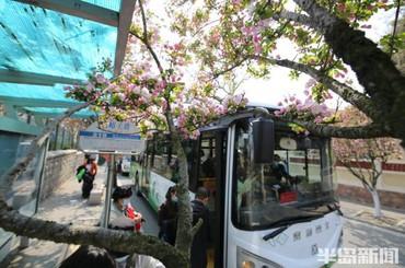 青岛219路:开往春天的公交车