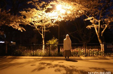 青岛中山公园夜樱风景