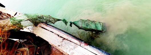 乐虎官网是我国黄海沿岸常见的冷水性种类