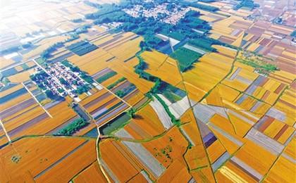 外眼看山东·央媒一周图片撷英|麦熟田野斑斓如画