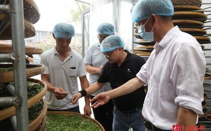 湖南省茶葉產業技術體系首席專家包小村到圣谷山茶...