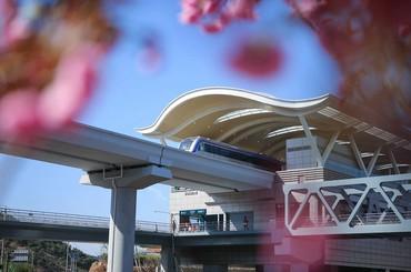 青岛地铁11号线美景登上微博热搜