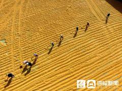 防洪防秋汛一线蹲点|为了身后1.5万亩玉米地