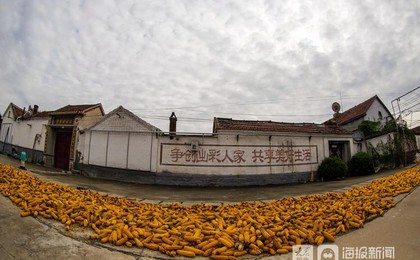 终于放晴!济南:村民抢收玉米分外忙